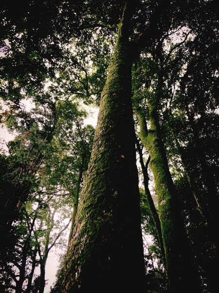 Hugging A Tree Climbing A Mountain