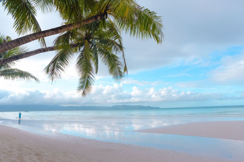 Water Beach Sea Land Sky Beauty In Nature Tranquility Cloud - Sky Tree Tranquil Scene Scenics - Nature Nature Plant Sand Horizon Over Water Horizon Day Outdoors Non-urban Scene Idyllic