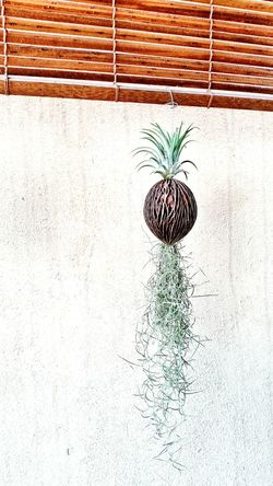 Beautiful Morning with Air Plants. 2 In 1 Design Pseudo-pineapple