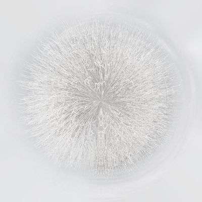 Little planet 360 degree sphere. Winter panorama. Snowy trees 3 Dimensional 360 Degree 360 Panorama Nature Panorama Panoramic Sphere Winter Wintertime Around Background Digitally Generated Image Forest Forest Trees Globe Landscape Outdoors Planet Snow Snowy Snowy Trees Three Dimensional Three Dimentional Photography White Color Winter Trees