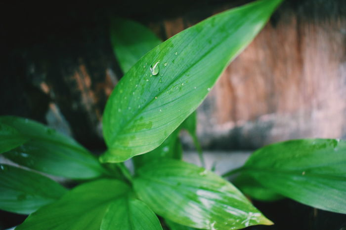 Green Color Outdoors No People Fragility Freshness Beauty In Nature Nature Rainy Days Rain Kerala