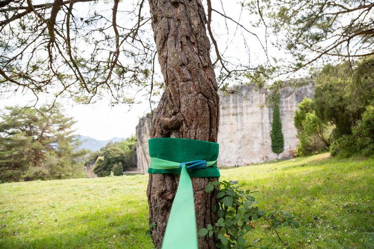 Gazebo on tree trunk in park