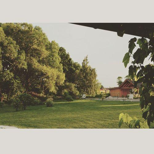Lesov Utatinka Summertime
