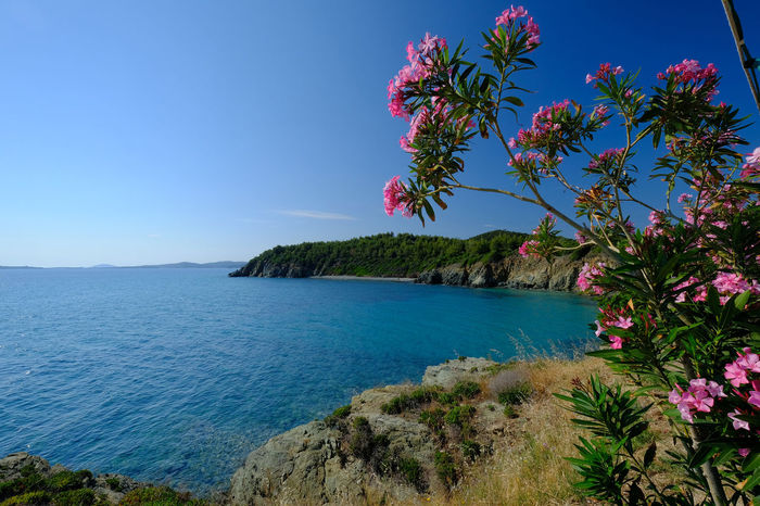 South of Sithonia Beauty In Nature Blue Blue Sky Chalkidiki Clear Sky Cliff Flower Greece Growth Landscape Mountain Nature No People Oleander Plant Scenery Scenics Sea Sithonia Sky Tranquil Scene Tranquility Travel Destinations Vegetation Water