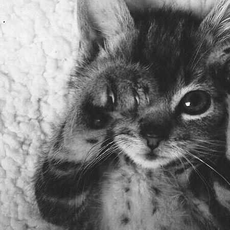 رمزياتBBM صور_رمزية رمزيات_منوعه Photo♡ Photo Cat صور رمزيات  First Eyeem Photo On A Health Kick