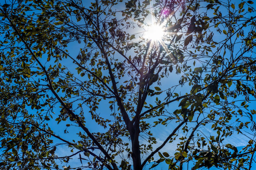 Afternoon Sunshine Beauty In Nature Branch Branches Day Leaf Leaves Light Low Angle View Nature No People Outdoors Sky Springtime Sun Sunlight Tree Tree