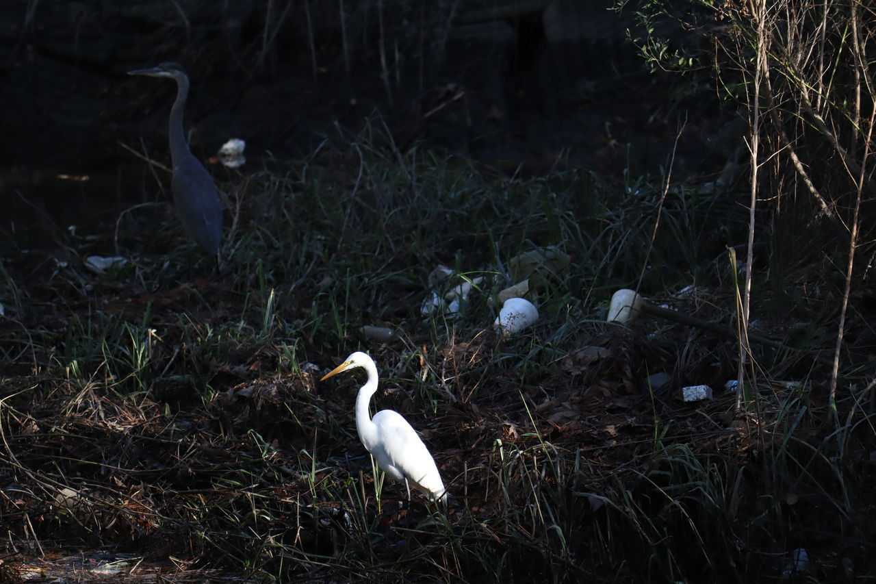 WHITE BIRD PERCHING ON FIELD IN FOREST