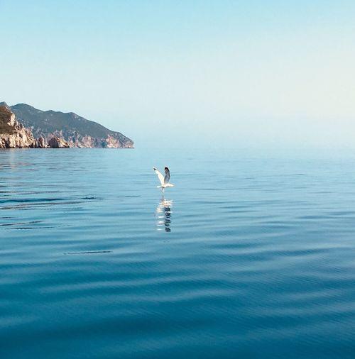 Bird landing on sea against clear blue sky