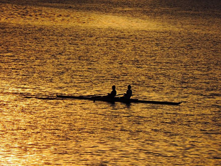 Silhouette River Boat Ride ボート部 川辺 黄金色に輝く川にボート部のシルエット✨ 青春 だな