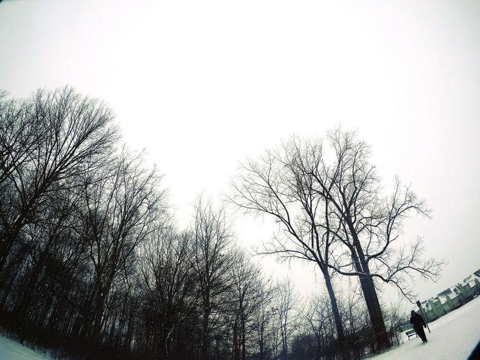Snow Tree Sky Close-up