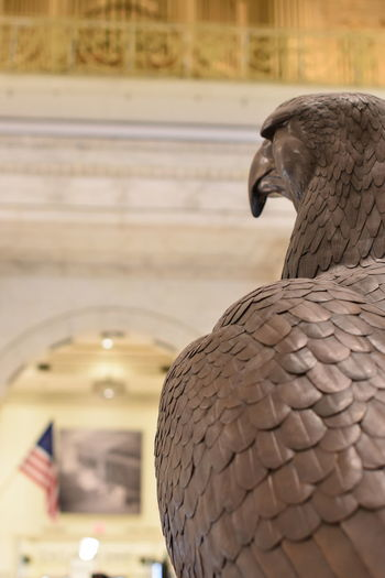 Eagle Statue Animal Themes Animal Wildlife Animals In The Wild Architecture Bird Close-up Day Flag Focus On Foreground Nature No People One Animal Outdoors