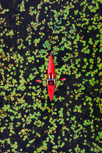 High angle view of red leaves floating on plant