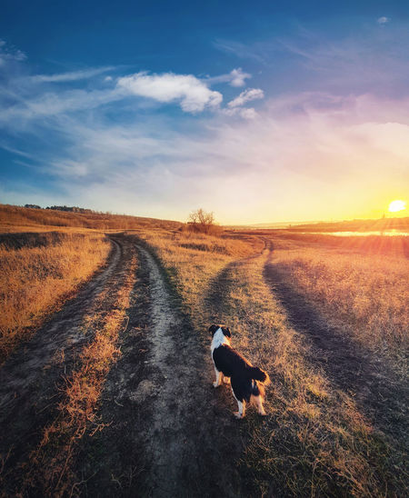 A dog purpose, vertical shot. doubtful pup in front of a split country road, autumn sunset scene.