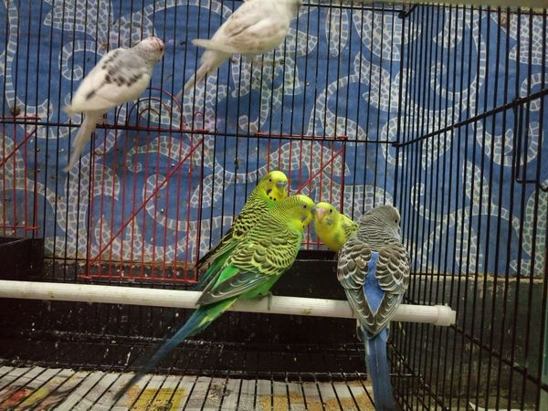 Abundance Animal Animal Themes Animals In The Wild Balance Bird Cage Captivity Close Up Close-up Day Friendship No People One Animal Perching Relaxing Togetherness Two Animals Wildlife Zoology