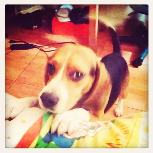 Tobi :) My Bestfriend ♡