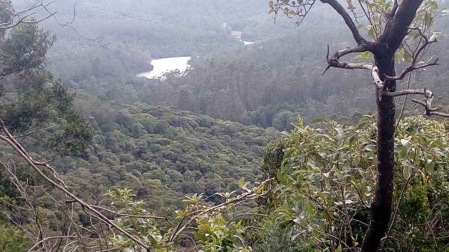 Kodai Coolbreezyweather Nature Forest Photography Forest