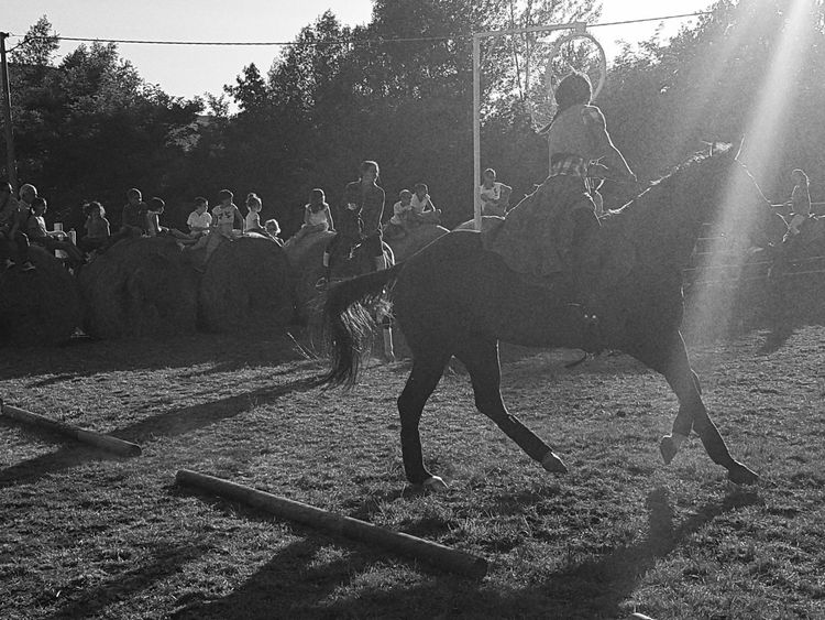 Country People Country Life Horse Carousel Horse Horses Outdoors Blackandwhite Domestic Animals Real People Countryfair Day Nature Taking Photos Cellphone Photography Enjoying Life Horseback Riding Horserider Dust
