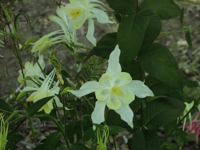華 花 植物 白 Beauty