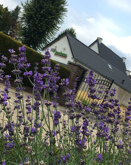 If I had a flower for every time I think of you, I could walk in my garden forever. Photography Summer Plant Flower Flowering Plant Architecture Built Structure Building Exterior Growth Nature Fragility Beauty In Nature No People Day Freshness Vulnerability  Sky Building House Tree Low Angle View Purple