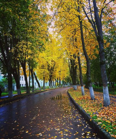 Beautiful Octubre October Tranquility Tree Autumn The Way Forward Season  Tree Trunk Beauty In Nature Nature Yellow Gold Otoño Colors