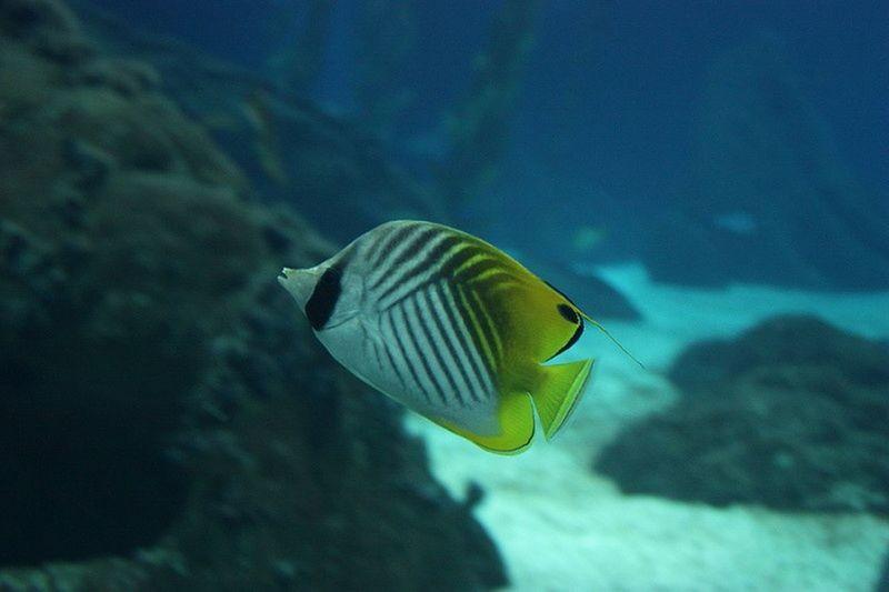 Sea Life Sea Colorfish Fish Wildlife & Nature Wildlife Water_collection Seacollection Yellowfish Colourfish