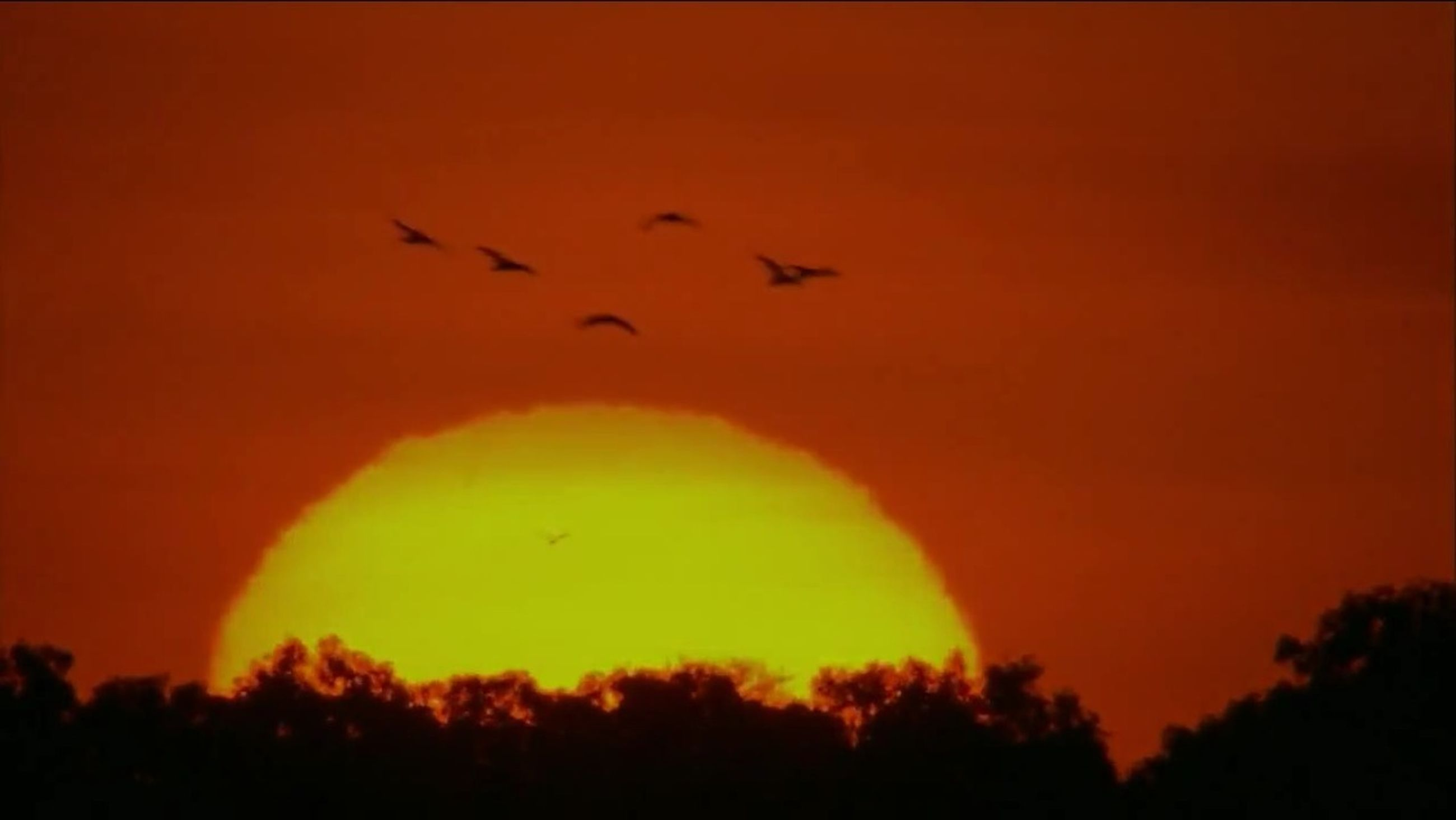 sunset, silhouette, orange color, flying, bird, beauty in nature, sky, scenics, tranquil scene, tranquility, tree, low angle view, nature, idyllic, animal themes, outdoors, dramatic sky, wildlife, mid-air, no people