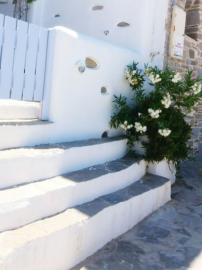 Islands Island Greece Paros_island Paros Greece Paros Greek Islands Greek Summer Summer Blue White Blueandwhite Photo