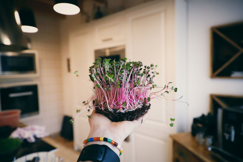 Midsection of woman holding microgreens at home