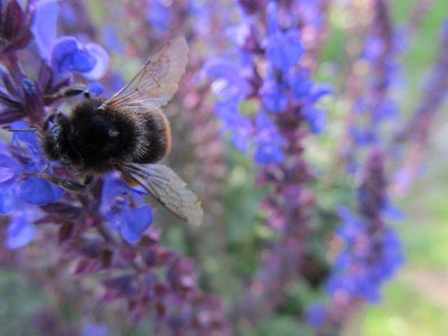 PowerShot SX130IS Canon Retzstadt Bavaria Franconia Franken Bayern Taking Photos Blumen Flowers