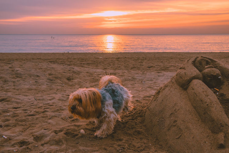 Dog on the beach Barcelona Animal Beach Beachphotography Beauty In Nature Canine Cloud - Sky Dog Domestic Domestic Animals Horizon Horizon Over Water Land Mammal Nature No People One Animal Outdoors Pets Puppy Sea Sky Small Sunset Water