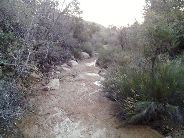 Hualapai Mountain Creek Water_collection Taking Photos Naturelovers Nature_collection Beautiful Nature Eye Em Nature Lover