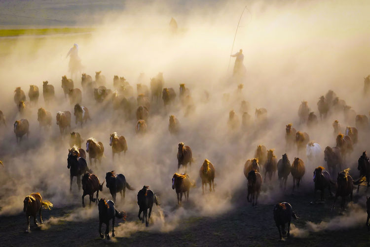 sunset into the dust Dusty Track Dust Road Horse Photography  Horse Life Horseman HorseNAround Travel Photography Travelling Sunset_collection Journey Journeyphotography Journey Of Life Journeyman Traveling In China Crowd Farmer Togetherness Smoke - Physical Structure Dust Animal Migration EyeEmNewHere