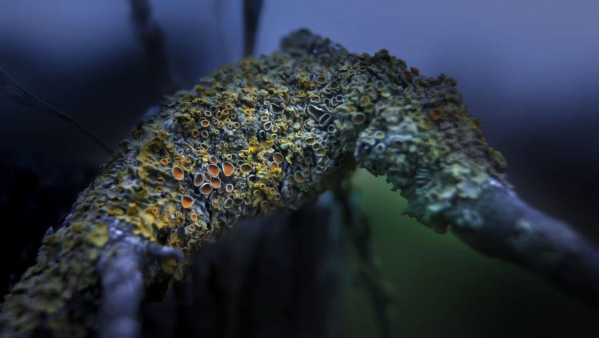 Night Nightphotography Lichens Lichens On Tree Colors Colorsplash Nature Nature_collection Nature Photography Naturelovers Licheni Lichen Lichen On A Tree Lichen Beauty Lichen On A Rock Lights Light And Shadow D800 Brescia Eltano86 No People Colors Of Nature Outdoors Noche Nightlife