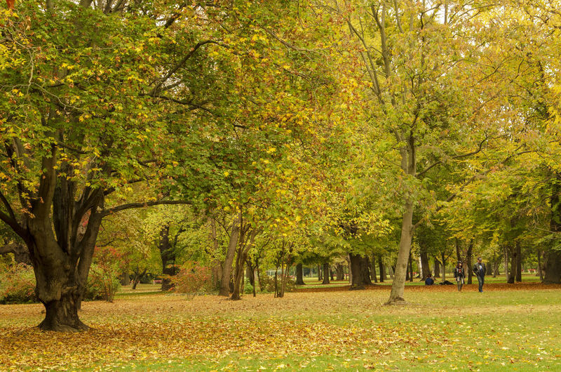 Amazing Landscapes of Budapest, Views of Hungary Tree Plant Autumn Park Beauty In Nature Nature Tranquility Landscape Plant Part Leaf Environment Tree Trunk Land Trunk Change Park - Man Made Space Scenics - Nature Tranquil Scene Growth Grass Outdoors Leaves