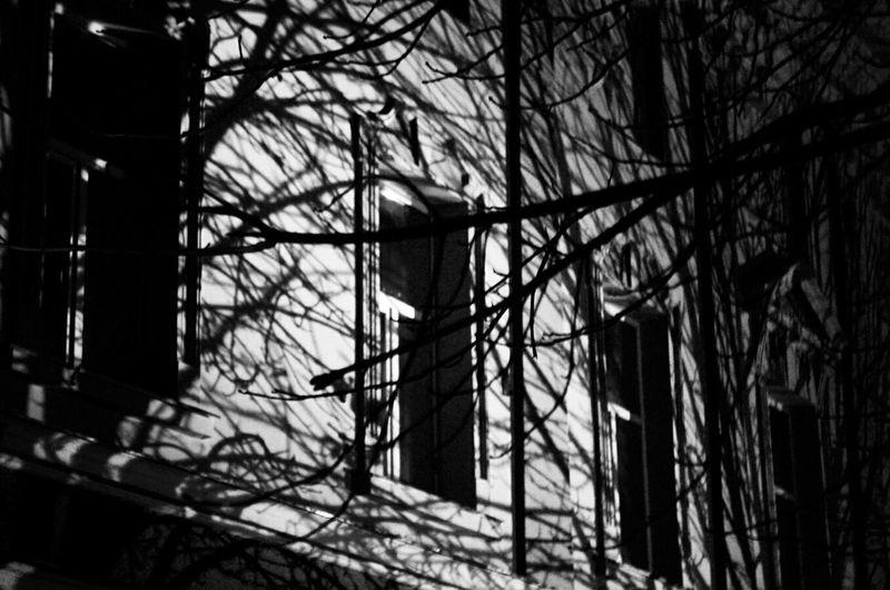 Shadow Light And Shadow Trees Interesting Night Nightphotography