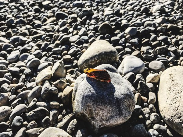 Bird Animal Themes Beach Rock - Object Animals In The Wild No People Animal Wildlife Nature Outdoors Day Sea Pebble Colony Perching IPhoneography Forggensee First Eyeem Photo IPhone 7 Plus Füssen Beauty In Nature Bavaria Mountain Standing Water Patchwork Landscape Aerial View