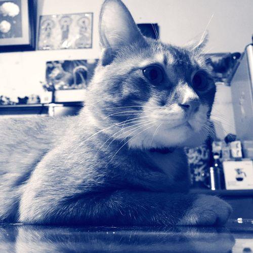 Today's Hot Look The Moment Taking Photos EyeEm Best Shots Enjoying Life Cat