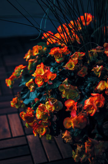 red and yellow flowers with dark green leaves, retro vintage style, shabby chic effect