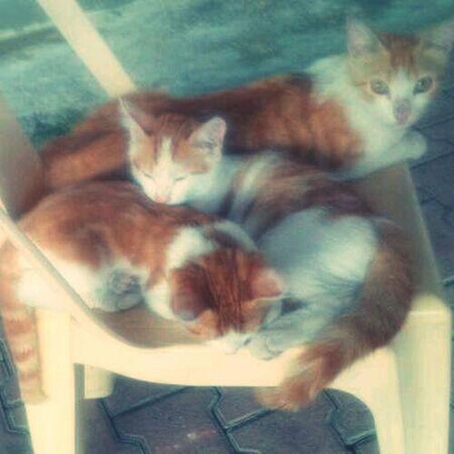 Cat Cats Catstagram Cats Sleeping Style