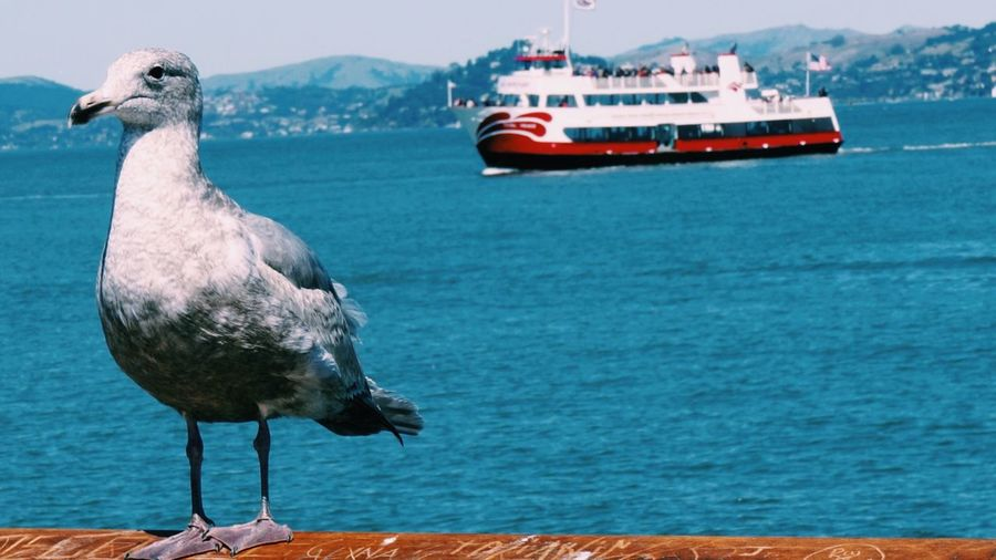 Seagull perching on boat in sea