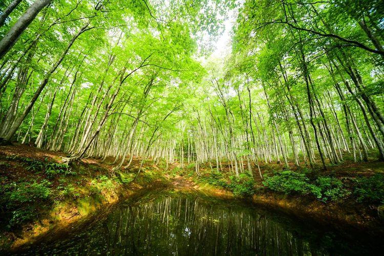 森の中の泉。 Tree Plant Green Color Beauty In Nature Forest Growth Tranquility Land Nature No People Water Scenics - Nature Day Tranquil Scene Outdoors Non-urban Scene Environment WoodLand