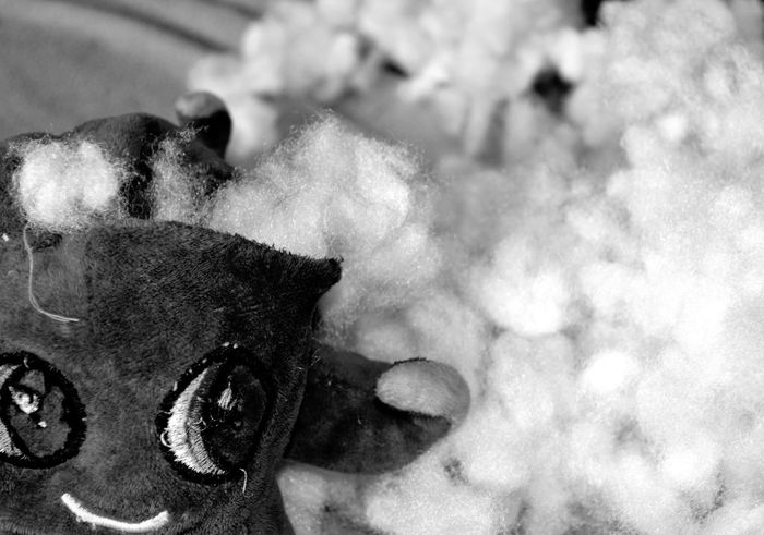 Soft Toy Black And Grey Black And White Damaged Destroyed Fix It Up Puppy Love Destruction Soft Toy Destruction Stuffing Like Clouds Toy Weak Link Weak Stitching White White Stuffing Wrecked Soft Toy Wrecking
