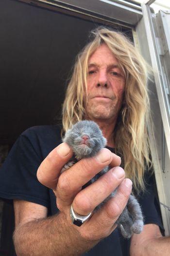 A newborn kitten, Russian Blue mix. Pets Cat Kitten Russian Blue Grey Newborn Wonder Life