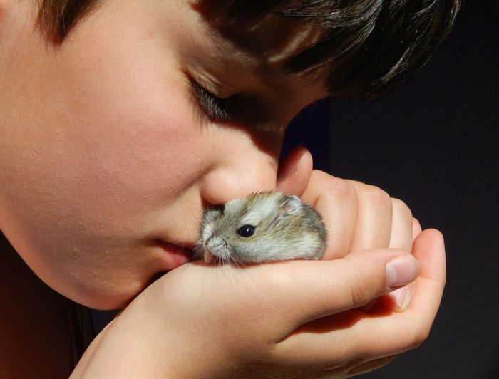 Animal Themes Boy Calmness Caring Child Close-up Face Close Up Fragile Hamster Human Hand Intimate Love No Worries People Perfect Pet Love Pets Lover Safe Touching Young The Portraitist - 2018 EyeEm Awards