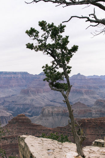 Arizona Grand Canyon Grand Canyon National Park America Beauty In Nature Day Landscape Mountain Mountain Range Nature No People Outdoors Physical Geography Scenics Sky Tranquil Scene Tranquility Travel Destinations Tree