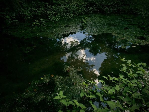Water Reflection Green Color Nature Sky