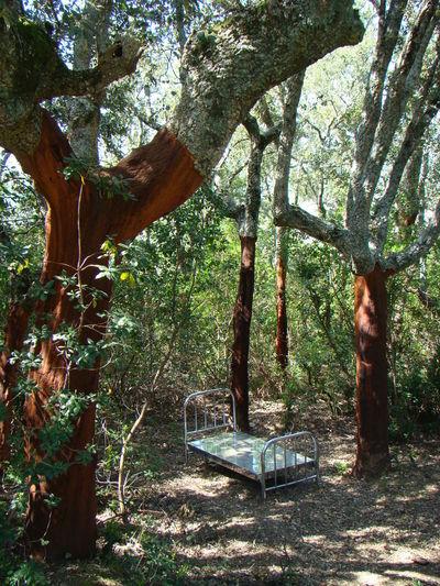 Sierra De Francia Art Art In Nature
