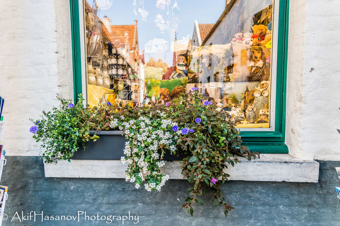 Building Exterior City Flower Flower Head Fragility Freshness Growth Outdoors Plant Potted Plant Window Window Box