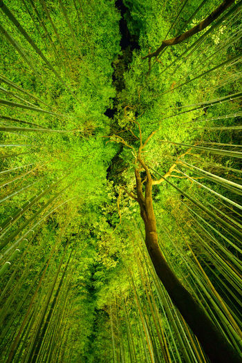 Low angle view of illuminated green trees in forest at night