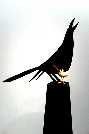 Intervention Modern Art Cartagena, Colombia Birds Toysphotography